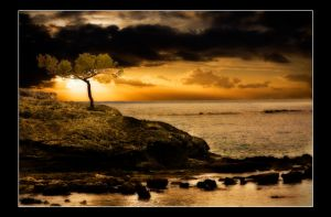 A Lonely Tree Watching Sunset by PortraitOfaLife