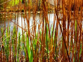 Reed Curtain by boberito