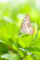 Panamanian Butterfly by MichelleRamey