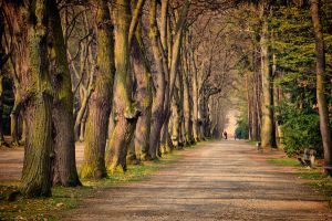 Spring Walk by tomsumartin