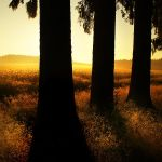 talking to the trees by Megson
