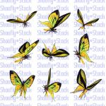 Butterfly Stock 10 by Shoofly-Stock