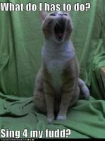 Funny Cat Pic 1 by AlemaxhaxsFan67