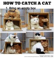 how to catch a cat by zanguichi