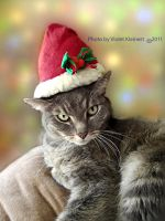 Holiday Cat by Violet-Kleinert