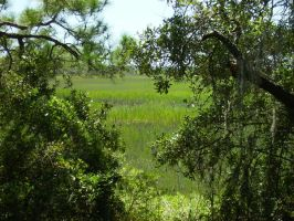 Tybee Maritime Forest by xihearthe80sx