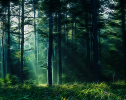 ForestEdge by Fractalholic