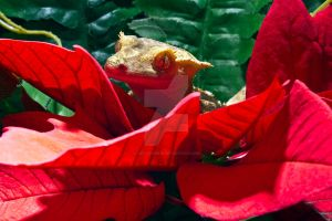 Fabio On Poinsettia - 4 by creative1978