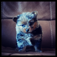 My New Puppy  by Mellowbeauty