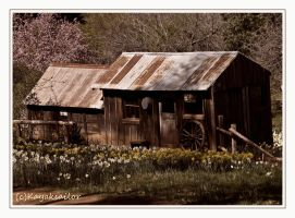 Daffodil Hill original home by kayaksailor