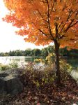 Fall by the pond by Waxflower