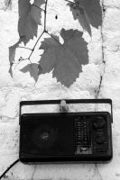 old radio and wine leaves by Shreever