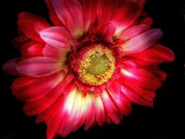 floral by awjay