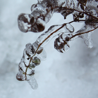Erindale by Blue-Berry-Boy