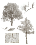Tree Studies by RaunchyOpposition