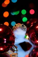 Christmas Gecko by cathy001