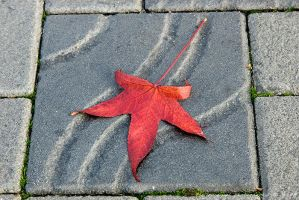 Leaf on Tile by bimjo