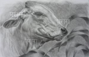 Cow by parag457