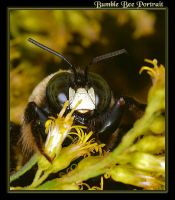 Another Bumble Bee Portrait by boron