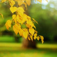 and it was all yellow by Laura1995