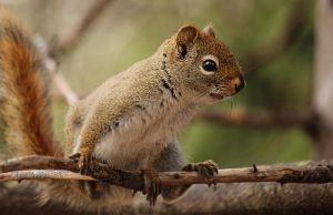 Nut Hunting by CanonSX20