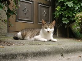 Cat in Japan:Cat on street 20 by iguru71