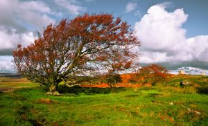Northumberland Tree 5 by newcastlemale