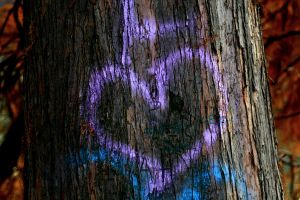 4 the love of trees by lucifersdream