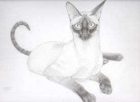 Black and White Cat by mysteriouswhitewolf