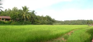 path to ricefields by altanimator