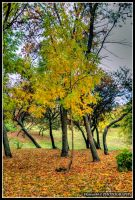 autumn tree by Iulian-dA-gallery