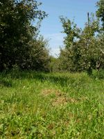 Apple Orchard 8 by FairieGoodMother