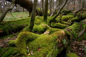 a realm of moss by Pippa-pppx