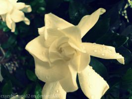365 Project-Day 59: Dew Drops by hourglass-paperboats