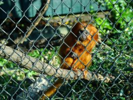 Caged from Extinction by SweetSoliloquy