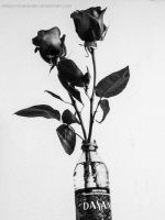 Dasani Roses by PixiePoxPhotography