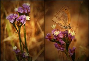 To be soft 03 by Nile-Paparazzi