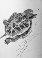 Turtle by Empi-lll
