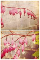 Spring - Bleeding Hearts by MagpieMagic