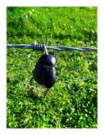 Dung Beetle by bills2020