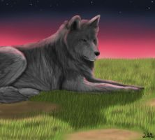 Grey Wolf Sunset by shademist030