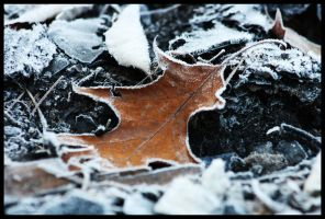 Fall Frost by N12X93R