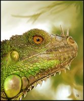 Green iguana's head by Geirahod