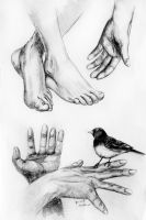 Hands and Feet Study by EchoLanding