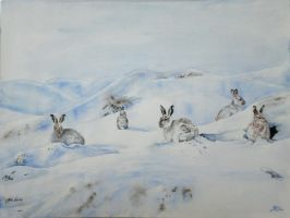 Mountain Hares by SpecialNightStar