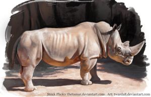 Rhino - Photo Study by Twarda8