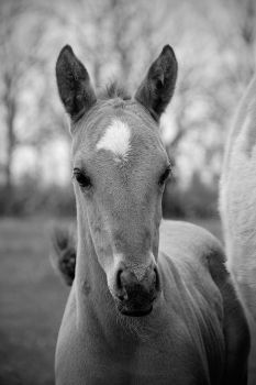 Foal by geeson