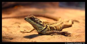 Lizard II by TVD-Photography