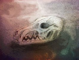 canid skull by Chequer