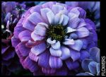 Flower-17 by MARCOSVFG